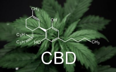 Buyer Beware: CBD, THC and Drug Testing
